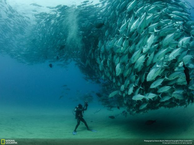 Photography by Octavio Aburto  Courtesy of National Geographic